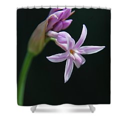 Shower Curtain featuring the photograph Flowering Bud by Tam Ryan