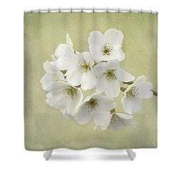 Dc Blossom Shower Curtain by Kim Hojnacki
