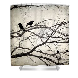 Decree At Sunset Shower Curtain by Angie Rea