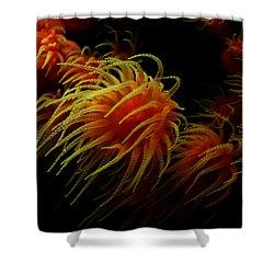 Deep Ocean Coral Polyp Shower Curtain