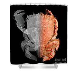 Deep Water Crab X-ray And Optical Image Shower Curtain by Ted Kinsman