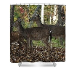 Shower Curtain featuring the photograph Deer In Forest by Lydia Holly