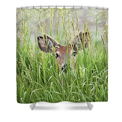 Deer In Hiding Shower Curtain by Art Whitton