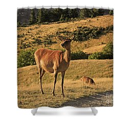 Deer On Mountain 2 Shower Curtain by Pixel Chimp