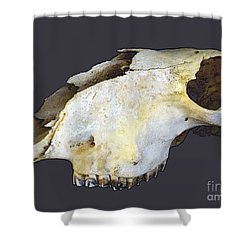 Deer Skull Shower Curtain by Renee Trenholm