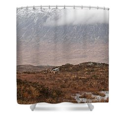 Deer Southern Highlands  Shower Curtain