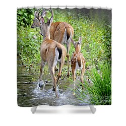 Shower Curtain featuring the photograph Deer Running In Stream by Nava Thompson