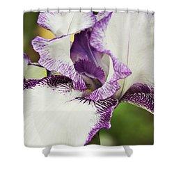 Delicate Ruffles 2 Shower Curtain