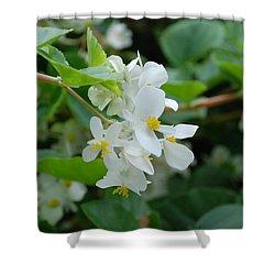 Delicate White Flower Shower Curtain by Jennifer Ancker