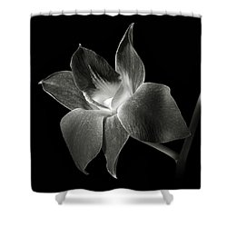 Dendrobium Orchid In Black And White Shower Curtain