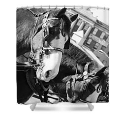 Denver Stock Show Shower Curtain by Colleen Coccia