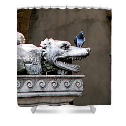 Despised Pigeon Shower Curtain by Eric Tressler