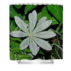 Dew Drops In The Morn  Shower Curtain by Jeff Swan