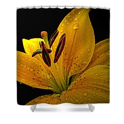 Shower Curtain featuring the photograph Dew On The Daylily by Debbie Portwood