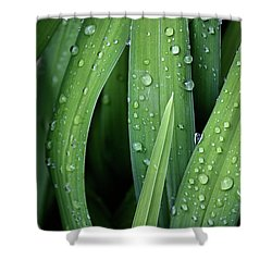 Dew To You Shower Curtain by Empty Wall