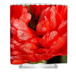 Shower Curtain featuring the photograph Dewdrops by Fotosas Photography