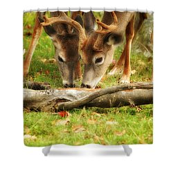 Dining Together Shower Curtain by Karol Livote