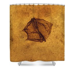 Dinoflagellate Fossil Shower Curtain by Eric V. Grave
