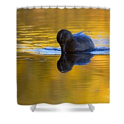 Dipping In Gold Shower Curtain by Mike  Dawson