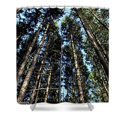 Shower Curtain featuring the photograph Dizzy In The Pines by Rachel Cohen