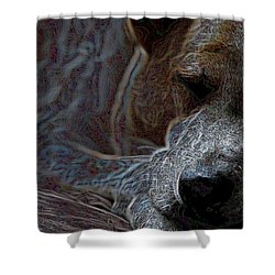 Do Not Disturb Shower Curtain by One Rude Dawg Orcutt