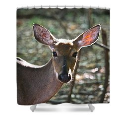 Doe Profile 9734 Shower Curtain by Michael Peychich