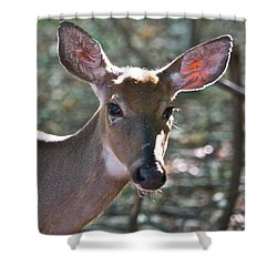 Doe Profile 9736 Shower Curtain by Michael Peychich