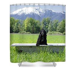Dog In Bathtub Shower Curtain