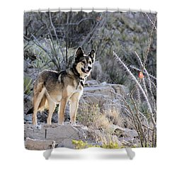 Dog In The Mountains Shower Curtain