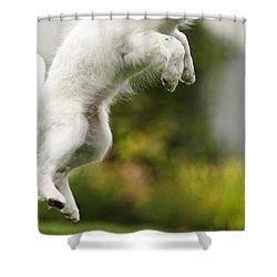 Dog Jumps Shower Curtain by Richard Wear