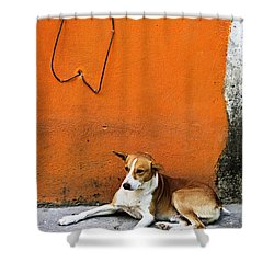 Dog Near Colorful Wall In Mexican Village Shower Curtain by Elena Elisseeva