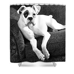 Dog On Couch Shower Curtain by Sumit Mehndiratta