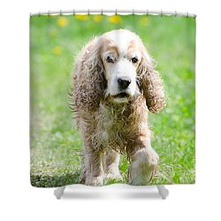 Dog On The Green Field Shower Curtain by Mats Silvan