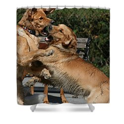 Dog Playground Shower Curtain by Valia Bradshaw