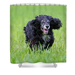 Dog Running On The Green Field Shower Curtain