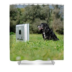 Dog Watching Tv Shower Curtain