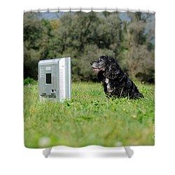Dog Watching Tv Shower Curtain