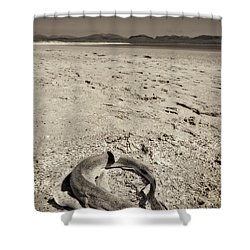 dogfish at Newborough Beach Shower Curtain by Meirion Matthias