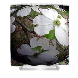 Dogwood Under Glass Shower Curtain