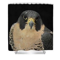 Don't Flinch... I Am Looking At You Shower Curtain