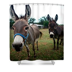 Shower Curtain featuring the photograph Doting Donkeys by Lon Casler Bixby