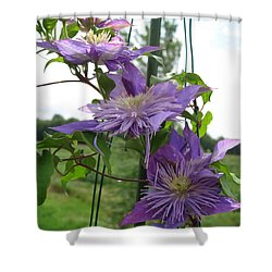Shower Curtain featuring the photograph Double Clematis Named Crystal Fountain by J McCombie