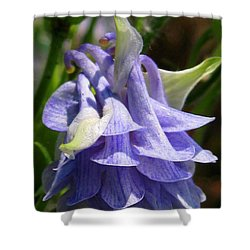 Shower Curtain featuring the photograph Double Columbine Named Light Blue by J McCombie