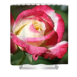 Shower Curtain featuring the photograph Double Delight Rose by Donna G Smith