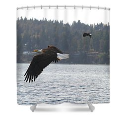 Double Trouble Eagles Shower Curtain by Kym Backland