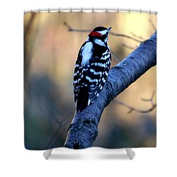 Shower Curtain featuring the photograph Downy Woodpecker by Elizabeth Winter