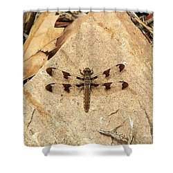 Shower Curtain featuring the photograph Dragonfly At Rest by Deniece Platt
