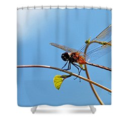 Dragonfly On A Vine Shower Curtain by Kay Lovingood