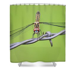 Shower Curtain featuring the photograph Dragonfly On Barbed Wire by Penny Meyers