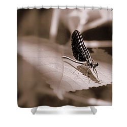 Dragons Dont Fly Shower Curtain by Ed Smith